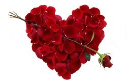 Rose-Flower-Petals-Heart-Good-Night-Hd-Wallpaper-With-Backgrounds-High-Quality-Of-Androids-Media-Tags